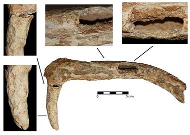 Descubren hoz en asta de ciervo del Neolítico Figure6