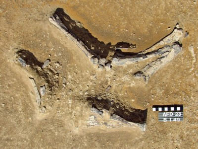 Figure 4. Antelope limb remains recorded at Affad-23 near a cluster of postholes.