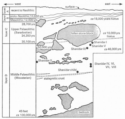 Figure 2. Schematic cross section of the Solecki excavation, showing his major cultural layers, the key radiocarbon dates and the relative positions of the Neanderthals (reproduced with kind permission of Ralph Solecki).